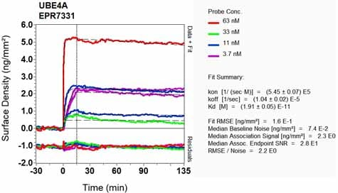 Other - Anti-Ube4a antibody [EPR7331] - BSA and Azide free (ab248191)