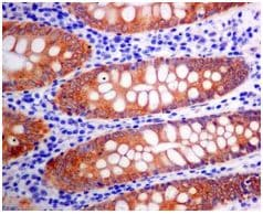 Immunohistochemistry (Formalin/PFA-fixed paraffin-embedded sections) - Anti-Erlin-2 antibody [EPR8089] - BSA and Azide free (ab248223)