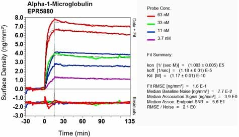 Other - Anti-Alpha 1 microglobulin antibody [EPR5880] - BSA and Azide free (ab248270)