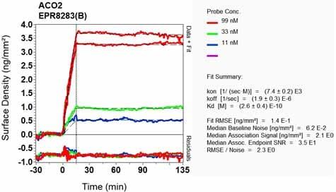 Other - Anti-Aconitase 2 antibody [EPR8283(B)] - BSA and Azide free (ab248303)