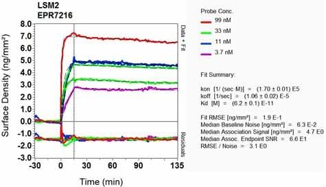 Other - Anti-LSM2 antibody [EPR7216] - BSA and Azide free (ab248322)