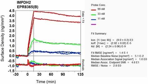 Other - Anti-IMPDH2 antibody [EPR8365(B)] - BSA and Azide free (ab248323)