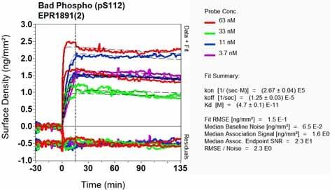 Other - Anti-Bad (phospho S112) antibody [EPR1891(2)] - BSA and Azide free (ab248343)