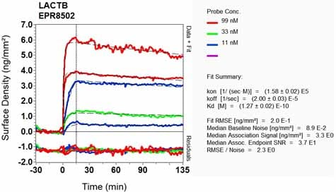 Other - Anti-LACTB antibody [EPR8502] - BSA and Azide free (ab248369)