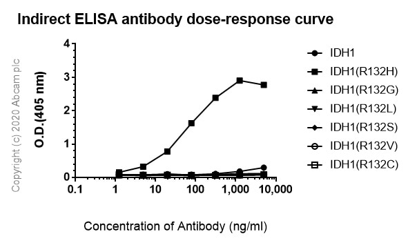ELISA - Anti-IDH1 antibody [HMab-2] - BSA and Azide free (ab256563)