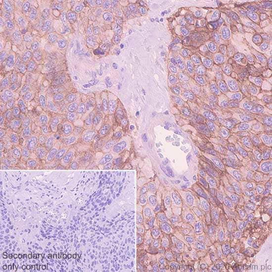 Immunohistochemistry (Formalin/PFA-fixed paraffin-embedded sections) - Anti-EGFR antibody [EMab-134] - BSA and Azide free (ab264547)