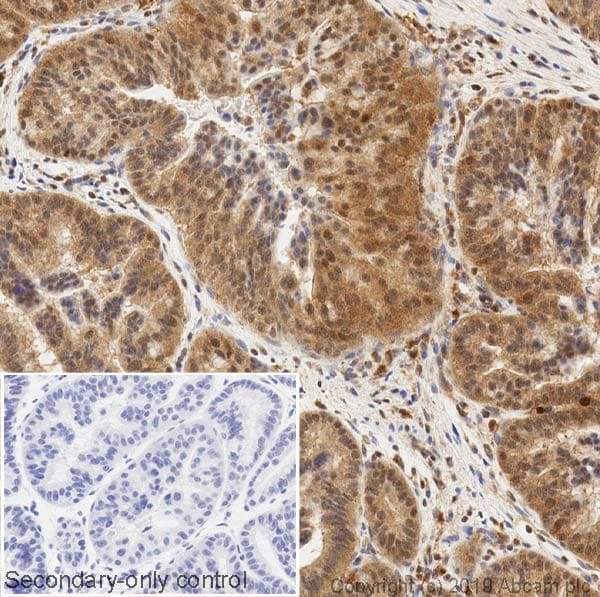 Immunohistochemistry (Formalin/PFA-fixed paraffin-embedded sections) - Anti-ERK2 antibody [1B3B9] - BSA and Azide free (ab269567)