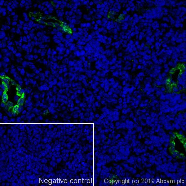 Immunohistochemistry (Frozen sections) - Anti-CD62P antibody [Psel.KO.2.7] - BSA and Azide free (ab269578)