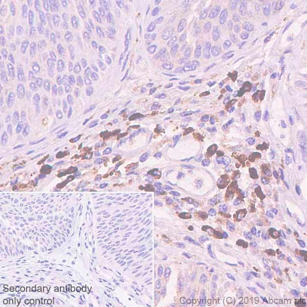 Immunohistochemistry (Formalin/PFA-fixed paraffin-embedded sections) - Anti-IGJ antibody [EPR23130-113] - BSA and Azide free (ab269860)
