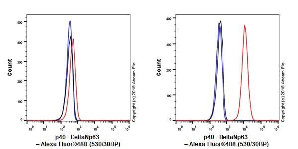 Flow Cytometry - Anti-p40 - DeltaNp63 antibody [EPR17863-47] - BSA and Azide free (ab269956)