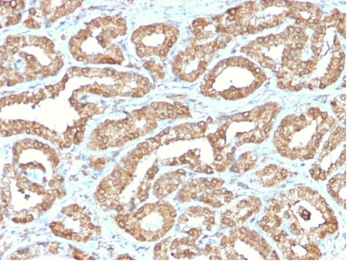 Immunohistochemistry (Formalin/PFA-fixed paraffin-embedded sections) - Anti-Ornithine Decarboxylase/ODC antibody [ODC1/2878R] - BSA and Azide free (ab270299)