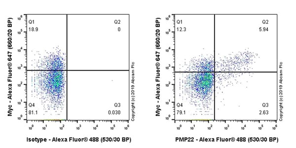 Flow Cytometry - Anti-PMP22 antibody [EPR23113-31] (ab270399)