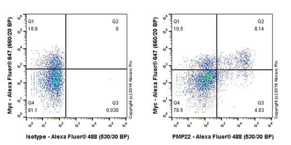 Flow Cytometry - Anti-PMP22 antibody [EPR23112-110] - BSA and Azide free (ab270407)