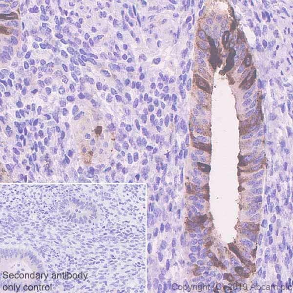 Immunohistochemistry (Formalin/PFA-fixed paraffin-embedded sections) - Anti-PAEP/Glycodelin antibody [EPR23251-87] - BSA and Azide free (ab270524)