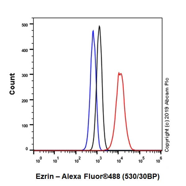 Flow Cytometry - Anti-Ezrin antibody [EPR23353-55] - BSA and Azide free (ab270525)