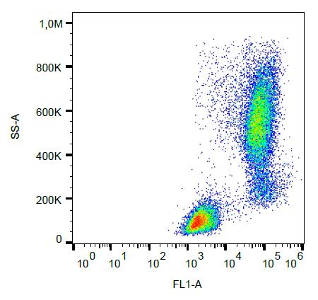 Flow Cytometry (Intracellular) - FITC Anti-Lysozyme antibody [LZ598-10G9] (ab270648)