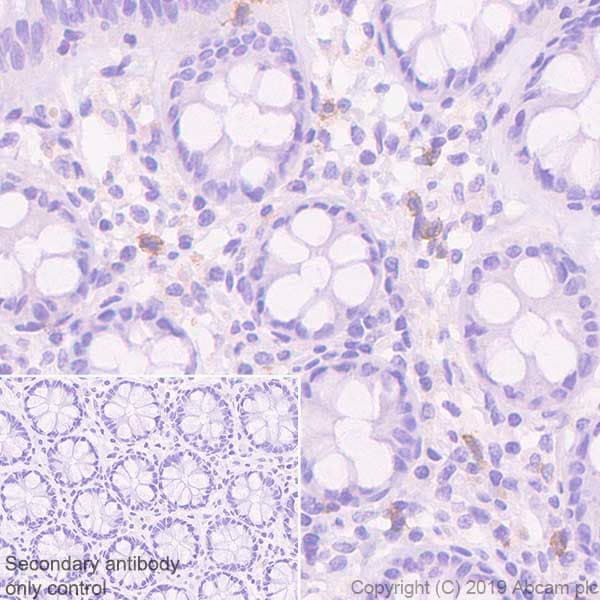 Immunohistochemistry (Formalin/PFA-fixed paraffin-embedded sections) - Anti-EMR1/ADGRE1 antibody [EPR23225-94] - BSA and Azide free (ab270798)