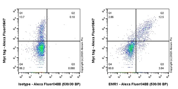 Flow Cytometry - Anti-EMR1/ADGRE1 antibody [EPR23225-94] - BSA and Azide free (ab270798)