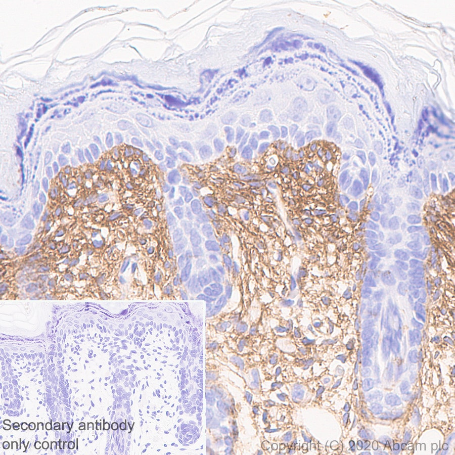 Immunohistochemistry (Formalin/PFA-fixed paraffin-embedded sections) - Anti-Collagen I antibody (ab270993)