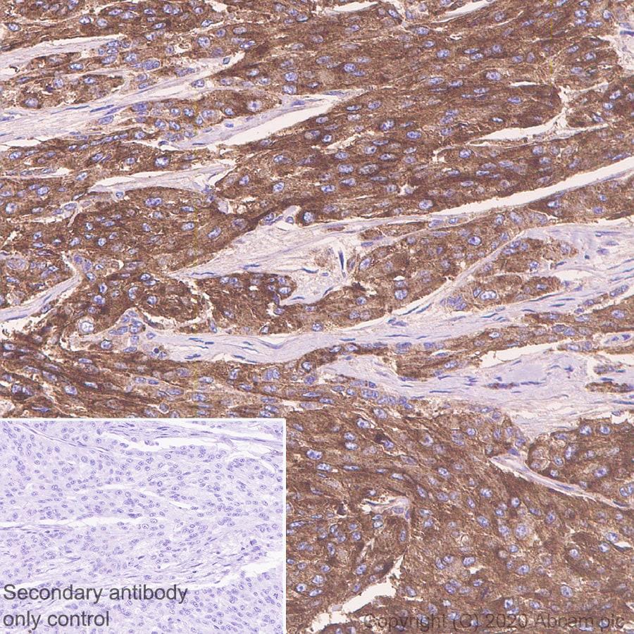 Immunohistochemistry (Formalin/PFA-fixed paraffin-embedded sections) - Anti-CD63 antibody [KILL150A] - BSA and Azide free (ab271296)