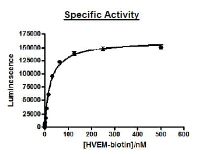 SDS-PAGE - Recombinant Human LIGHT/TNFSF14 protein (Tagged) (ab271588)