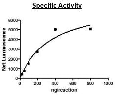 Functional Studies - Recombinant human STK33 protein (Active) (ab271749)