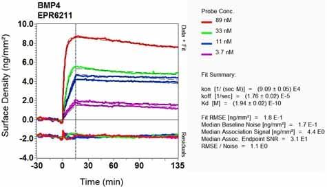 OI-RD Scanning - Anti-BMP4 antibody [EPR6211] - BSA and Azide free (ab271886)