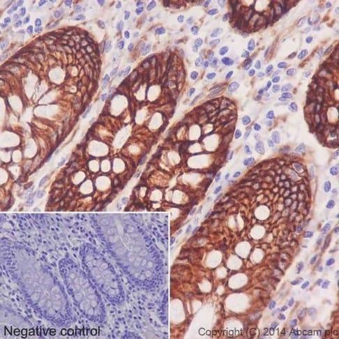 Immunohistochemistry (Formalin/PFA-fixed paraffin-embedded sections) - Anti-Integrin alpha 2 antibody [EPR17338] - BSA and Azide free (ab271936)