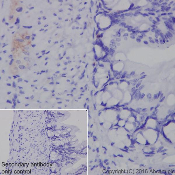 Immunohistochemistry (Formalin/PFA-fixed paraffin-embedded sections) - Anti-Neurofascin antibody [EPR19003] - BSA and Azide free (ab271948)