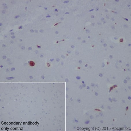 Immunohistochemistry (Formalin/PFA-fixed paraffin-embedded sections) - Anti-C3 antibody [EPR19394] - BSA and Azide free (ab271967)