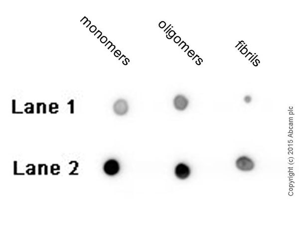 Dot Blot - Anti-beta Amyloid 1-42 antibody [mOC64] - BSA and Azide free (ab271968)