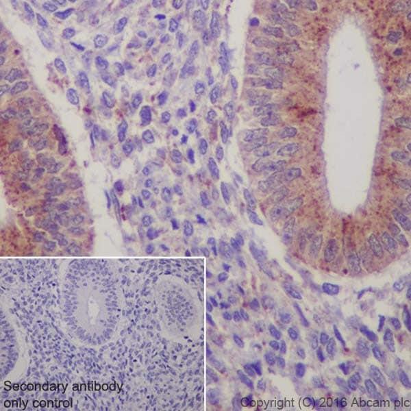 Immunohistochemistry (Formalin/PFA-fixed paraffin-embedded sections) - Anti-Niemann Pick C2 antibody [EPR19993] - BSA and Azide free (ab271975)