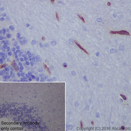 Immunohistochemistry (Formalin/PFA-fixed paraffin-embedded sections) - Anti-Scavenging Receptor SR-BI antibody [EPR20190] - BSA and Azide free (ab272003)