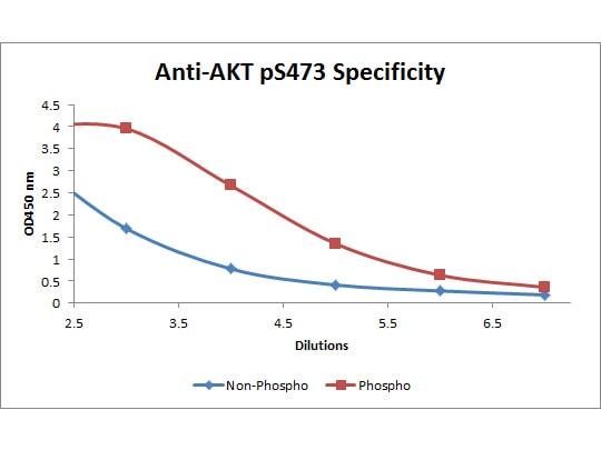ELISA - Biotin Anti-AKT1 (phospho S473) antibody [17F6.B11] (ab272113)