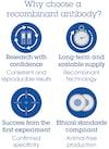 Anti-ICOS Ligand/ICOSL antibody [EPR23289-152] - BSA and Azide free (ab272697)