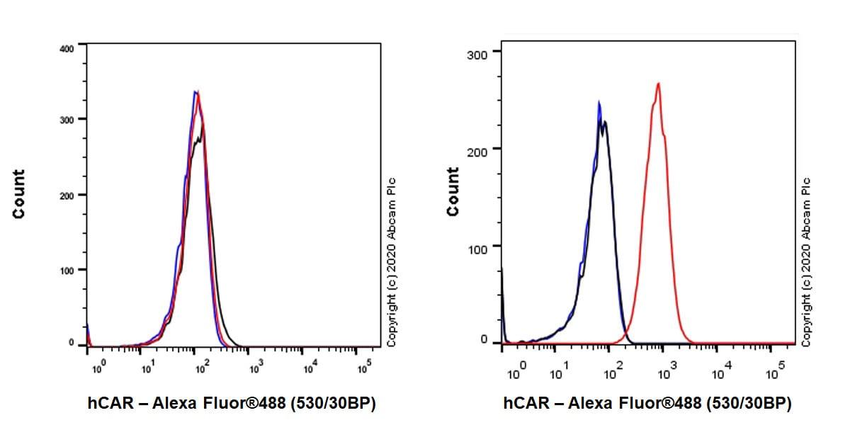 Flow Cytometry - Anti-Coxsackie Adenovirus Receptor/hCAR antibody [EPR23305-44] (ab272711)