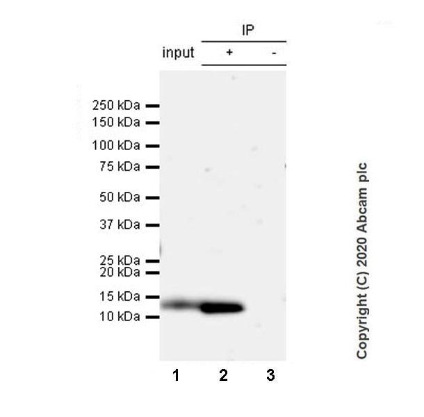Immunoprecipitation - Anti-Resistin antibody [EPR23388-272] (ab272730)