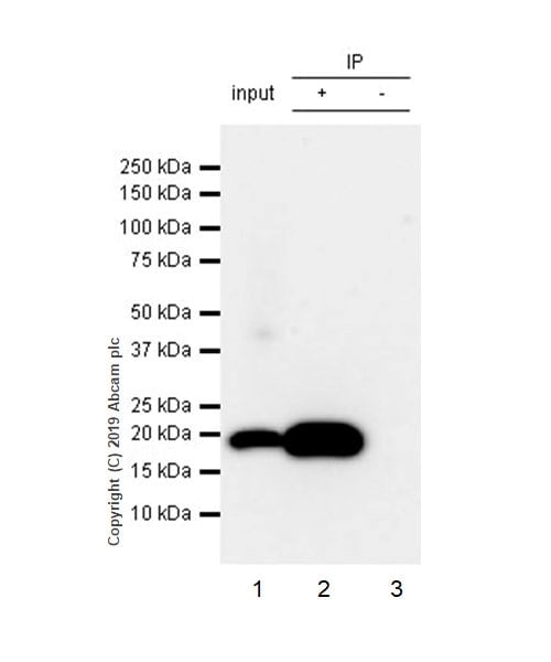 Immunoprecipitation - Anti-Bax antibody [5B7] (ab3191)