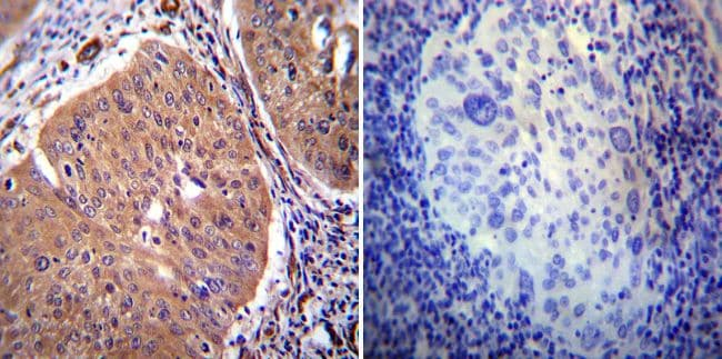 Immunohistochemistry (Formalin/PFA-fixed paraffin-embedded sections) - Anti-Calcium Pump PMCA2 ATPase antibody (ab3529)
