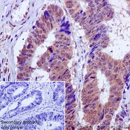 Immunohistochemistry (Formalin/PFA-fixed paraffin-embedded sections) - Anti-MCL1 antibody [Y37] (ab32087)