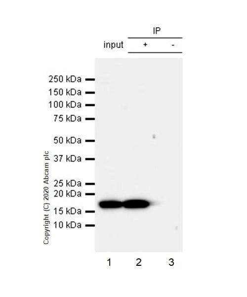 Immunoprecipitation - Anti-Histone H3 (phospho S10 + T11) antibody [E173] (ab32107)