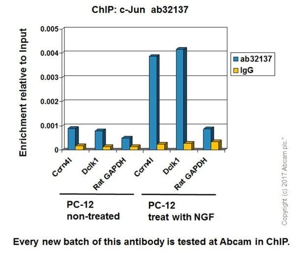 ChIP - Anti-c-Jun antibody [E254] (ab32137)