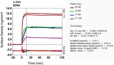 Other - Anti-c-Jun antibody [E254] (ab32137)