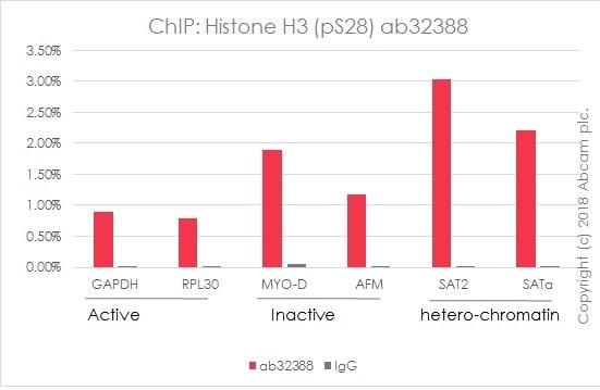 ChIP - Anti-Histone H3 (phospho S28) antibody [E191] - ChIP Grade (ab32388)