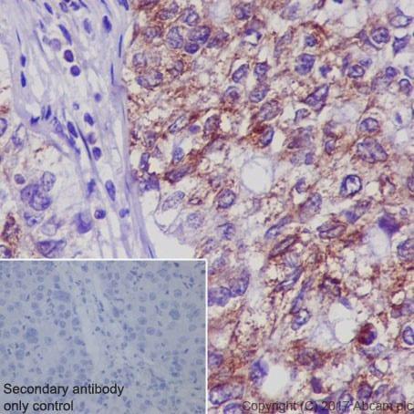 Immunohistochemistry (Formalin/PFA-fixed paraffin-embedded sections) - Anti-Bax antibody [E63] (ab32503)