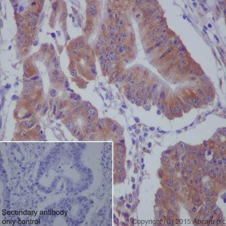 Immunohistochemistry (Formalin/PFA-fixed paraffin-embedded sections) - Anti-MEKK2 antibody [EP626Y] (ab33918)