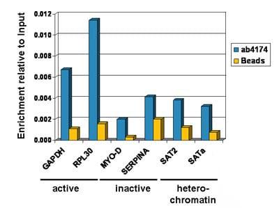 ChIP - Anti-Histone H2A.Z antibody - ChIP Grade (ab4174)