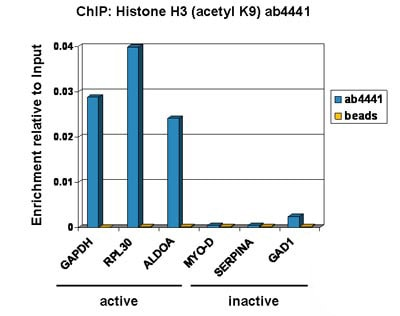 ChIP - Anti-Histone H3 (acetyl K9) antibody - ChIP Grade (ab4441)