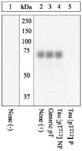 Western blot - Anti-Tau (phospho T212) antibody (ab4842)