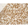 Immunohistochemistry (Formalin/PFA-fixed paraffin-embedded sections) - Anti-CD45 antibody [EP322Y] (ab40763)